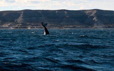 Puerto Madryn, ballenas y más 2021